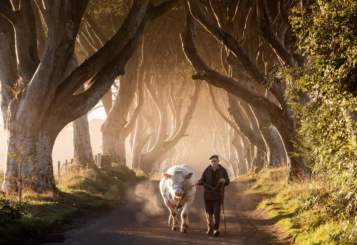 32294_The Dark Hedges
